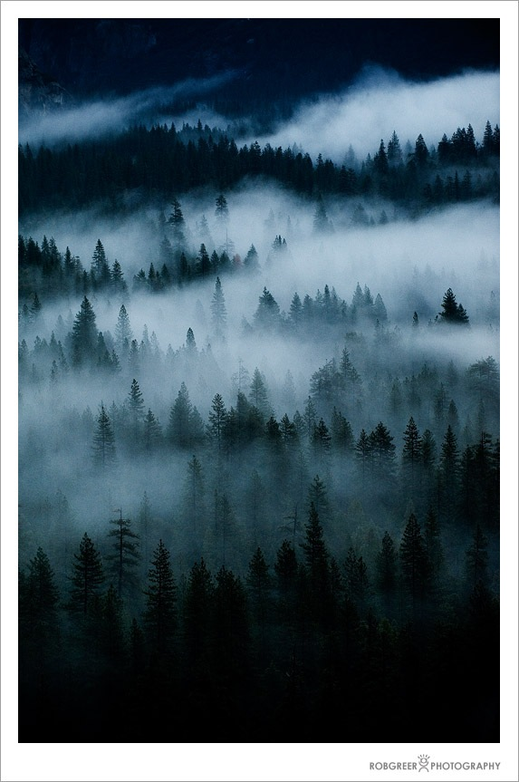 Fog and Trees in Yosemite